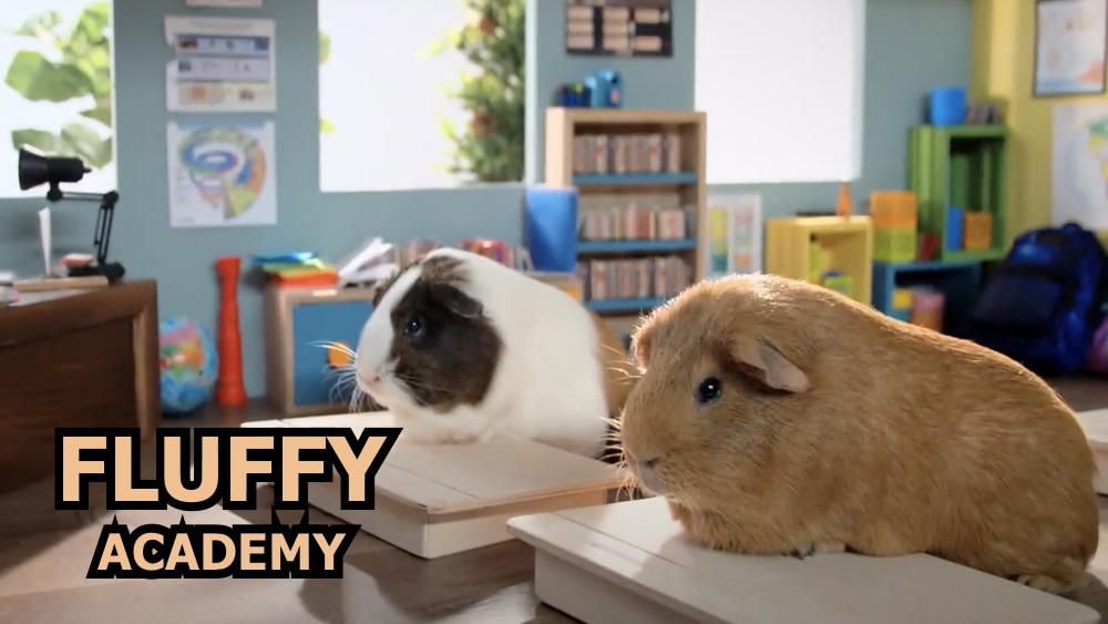 Fluffy Academy